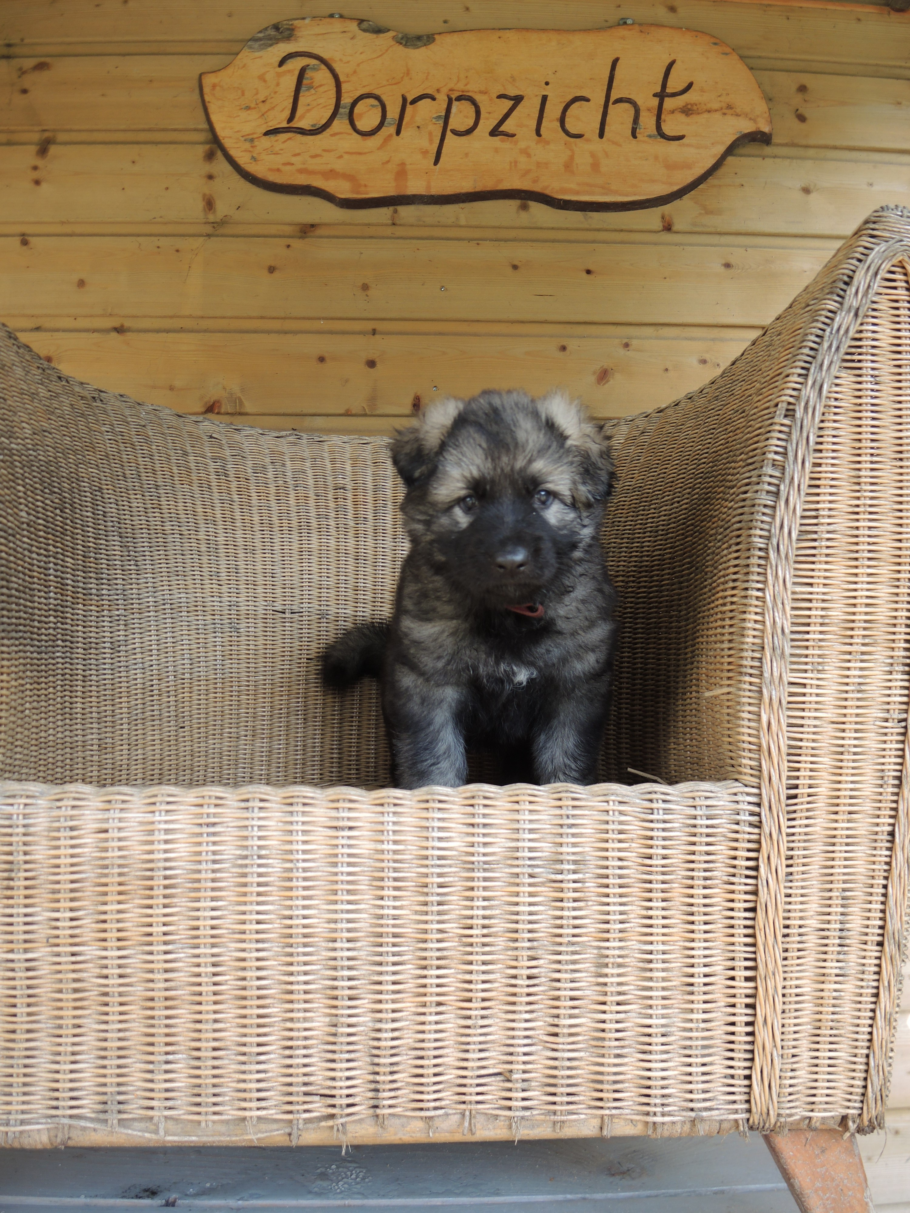 I-nest – Oudduitse Herder kennel van Dorpzicht